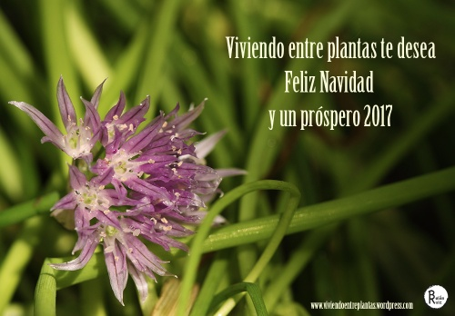 felicitacion-2017